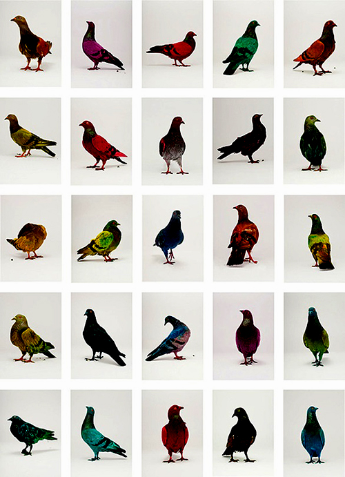 Painted Pigeons