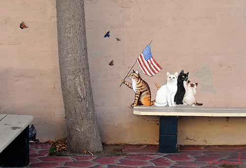 Arizona Cats Street Art